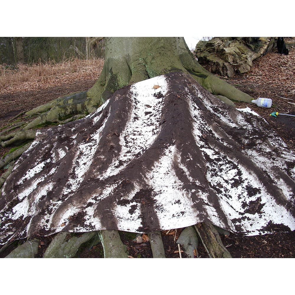 Himley woods root rubbing